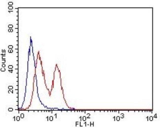 Rat anti-CD63, Clone: 7G4.2E8, Novus Biologicals:Antibodies:Primary Antibodies