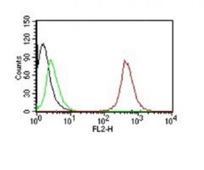 Mouse anti-CD63, Clone: NKI/C3, Azide Free, Novus Biologicals:Antibodies:Primary