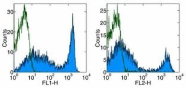 CD90.2 Rat anti-Mouse, Clone: 53-2.1, Novus Biologicals:Antibodies:Primary