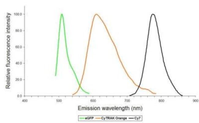 Novus BiologicalsCyTRAK Orange:Protein Analysis Reagents:Protein Assays