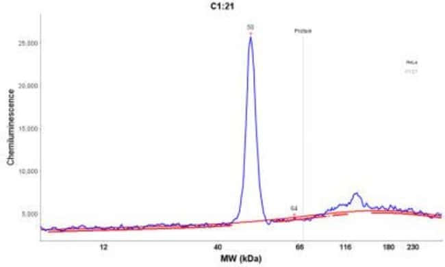 Mouse anti-Cytokeratin 19, Clone: A53-B/A2.26, Novus Biologicals:Antibodies:Primary
