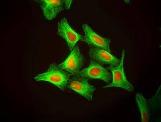 Novus BiologicalsDRAQ5:Protein Analysis Reagents:Protein Assays