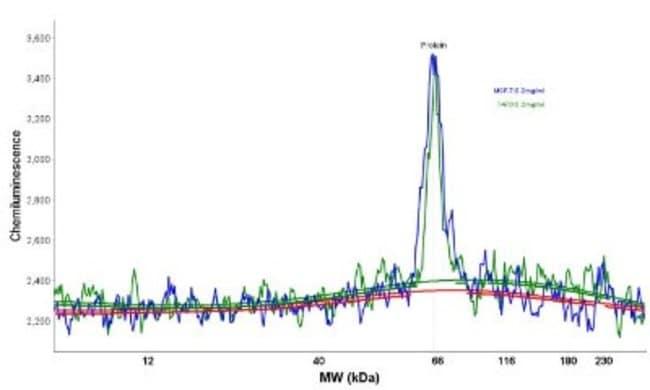 Mouse anti-Estrogen Receptor, Clone: ER506, Novus Biologicals:Antibodies:Primary