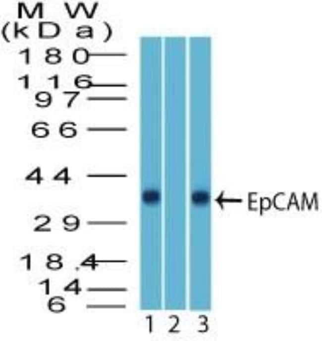anti-EpCAM/TROP1, Polyclonal, Novus Biologicals:Antibodies:Primary Antibodies