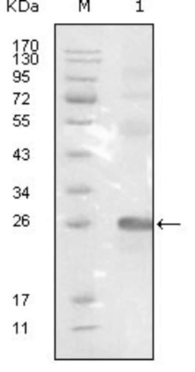 anti-EphB3, Clone: 4A122D1, Novus Biologicals 0.1mL; Unlabeled:Life Sciences