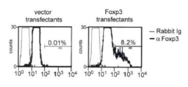 anti-FoxP3, Polyclonal, Novus Biologicals:Antibodies:Primary Antibodies