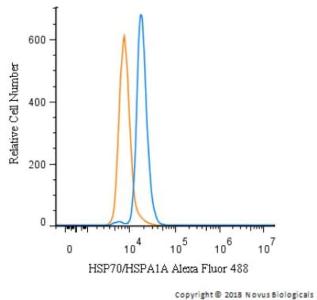 anti-HSP70/HSPA1A, Polyclonal, Novus Biologicals:Antibodies:Primary Antibodies
