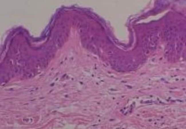 Novus BiologicalsHuman Multi Tissue MicroArray (Normal Adjacent):Microscope