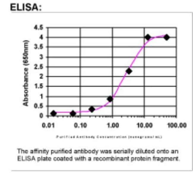 anti-IL-1 beta/IL-1F2, Polyclonal, Novus Biologicals:Antibodies:Primary