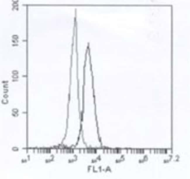 Mouse anti-IRAK4, Clone: 6F8, Novus Biologicals:Antibodies:Primary Antibodies
