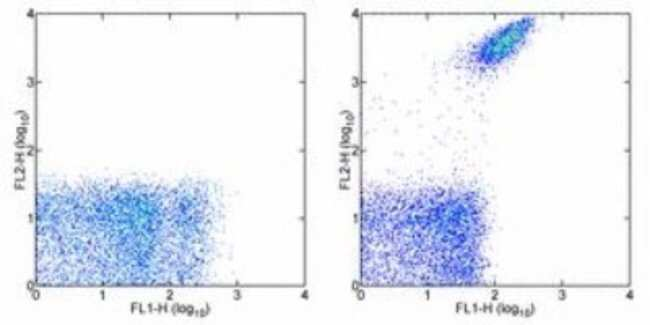 Integrin alpha 2b/CD41 Rat anti-Mouse, Clone: MWReg30, Novus Biologicals:Antibodies:Primary