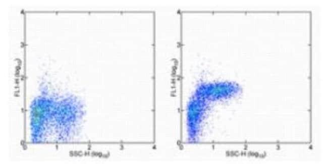 Armenian Hamster anti-Integrin alpha 5/CD49e, Clone: HMa5-1, Novus Biologicals:Antibodies:Primary