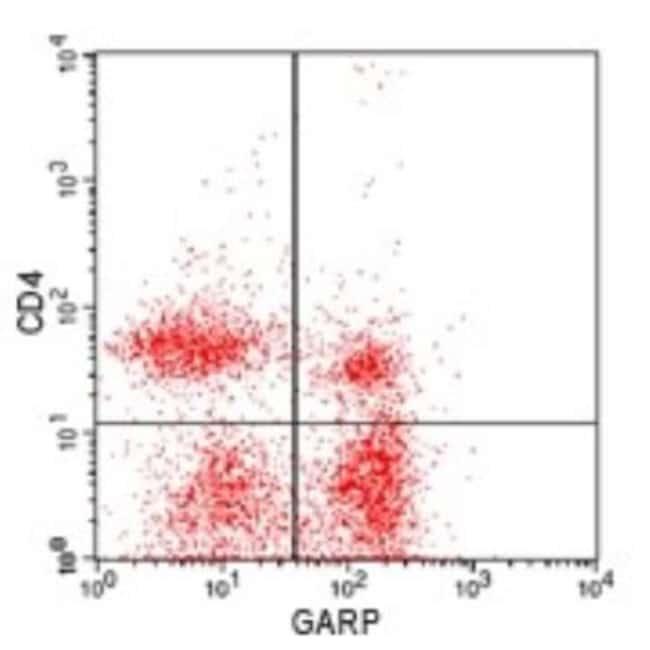 LRRC32/GARP Rabbit anti-Human, Mouse, Rat, Polyclonal, Novus Biologicals:Antibodies:Primary