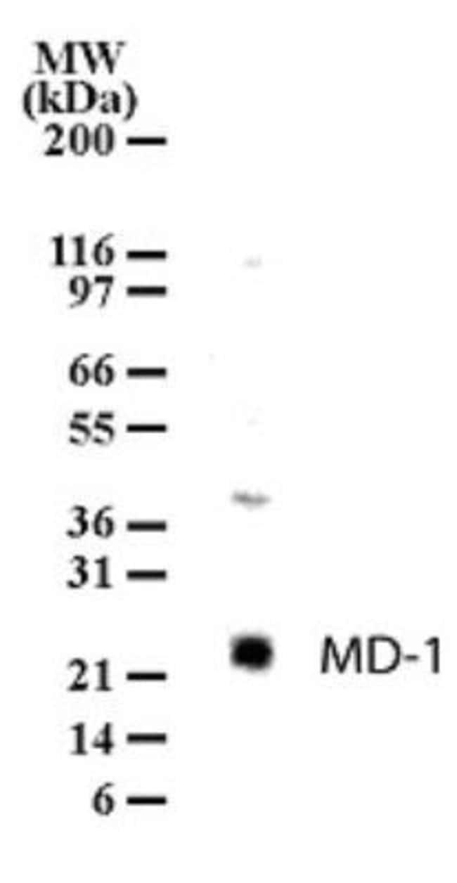 anti-MD-1/LY86, Polyclonal, Novus Biologicals:Antibodies:Primary Antibodies