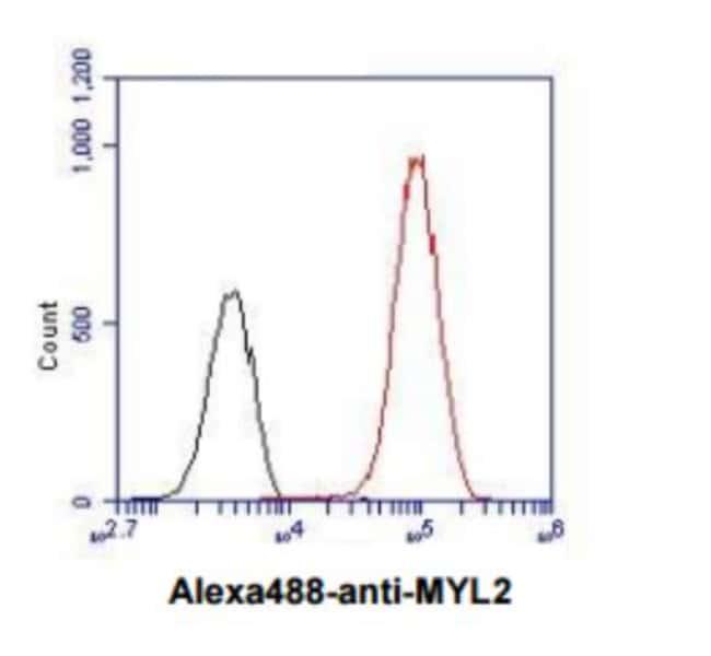 Myosin Light Chain 2 Mouse anti-Human, Mouse, Xenopus, Clone: 3B2, Novus