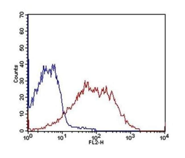 Mouse anti-OATP1B3/SLCO1B3/OATP8, Clone: 1E6.2F9, Novus Biologicals:Antibodies:Primary