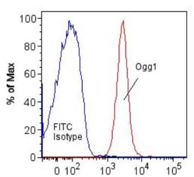 anti-OGG1, Polyclonal, Novus Biologicals:Antibodies:Primary Antibodies