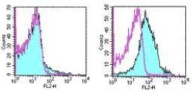 Armenian Hamster anti-PD-1, Clone: J43, Novus Biologicals 0.5mg; Unlabeled:Life