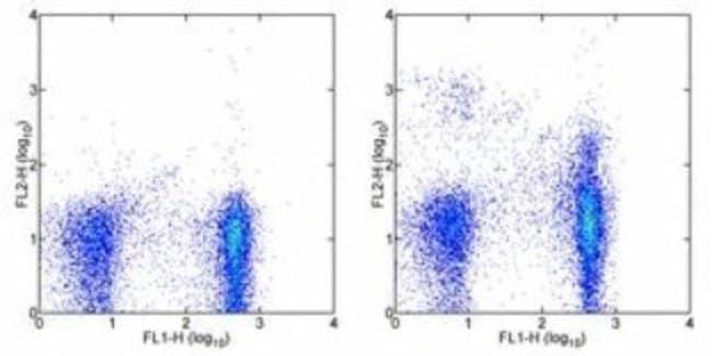 Plexin B2 Armenian Hamster anti-Mouse, Clone: 30000000, Novus Biologicals:Antibodies:Primary