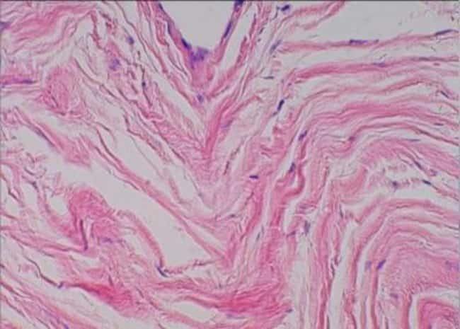 Novus BiologicalsPrimate Multi-Organ Tissue MicroArray (Normal):Microscope