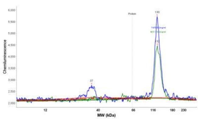 Mouse anti-Progesterone R/NR3C3, Clone: PR484, Novus Biologicals:Antibodies:Primary