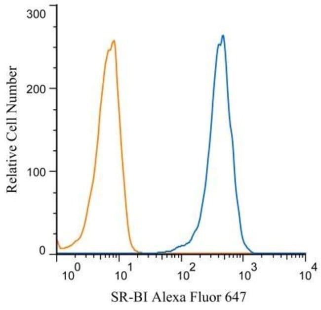 anti-SR-BI, Polyclonal, Novus Biologicals:Antibodies:Primary Antibodies