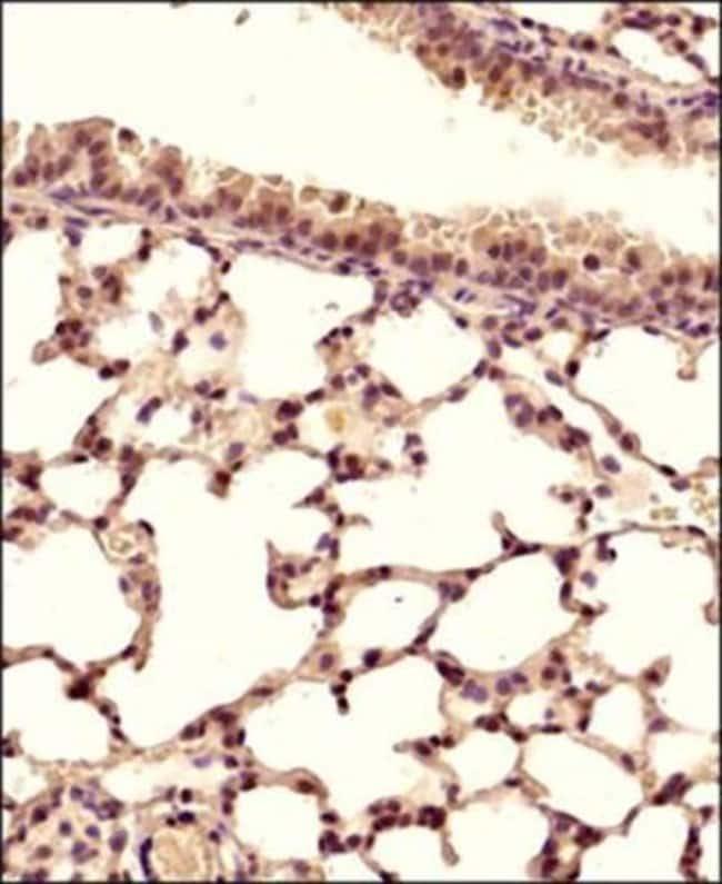 anti-STING/TMEM173/MPYS, Polyclonal, Novus Biologicals:Antibodies:Primary