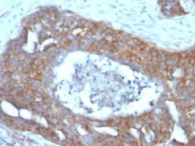 Mouse anti-TFF1/pS2, Clone: GE2, Azide Free, Novus Biologicals:Antibodies:Primary