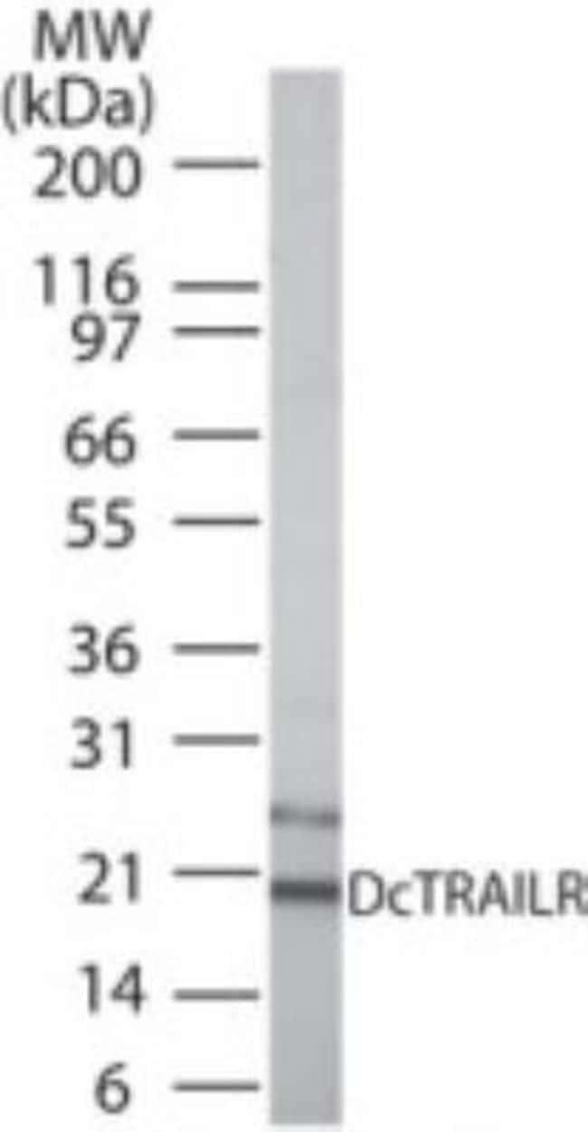 anti-TRAIL R3/TNFRSF10C, Polyclonal, Novus Biologicals:Antibodies:Primary