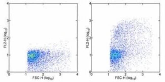 VCAM-1/CD106 Mouse anti-Rat, Clone: MR106, Novus Biologicals:Antibodies:Primary