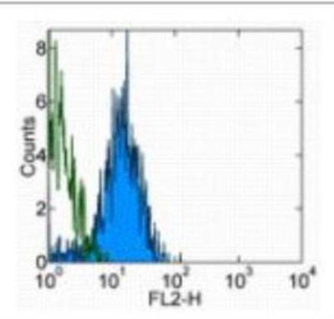 Rat anti-VE-Cadherin, Clone: BV13, Novus Biologicals:Antibodies:Primary
