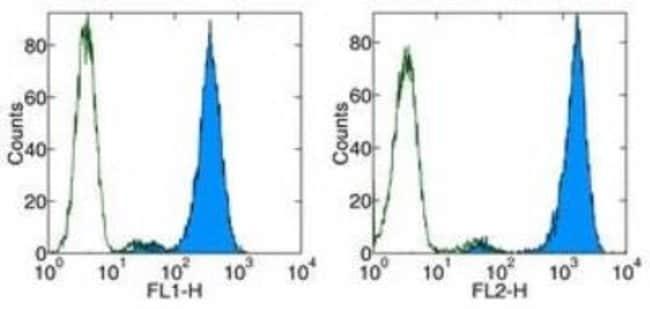 Rat anti-VEGF R3/Flt-4, Clone: AFL4, Novus Biologicals 0.5mg; Unlabeled:Life