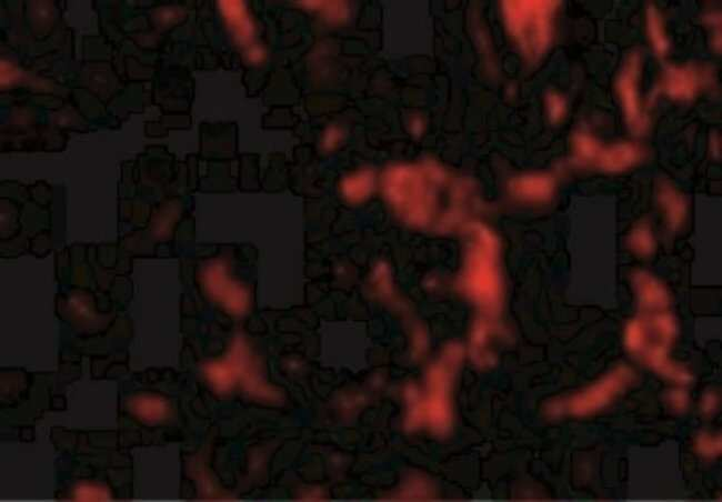 anti-Wnt-10a, Polyclonal, Novus Biologicals 0.1mg; Unlabeled:Life Sciences