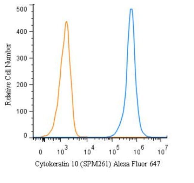 Mouse anti-pan Cytokeratin, Clone: C11, Azide Free, Novus Biologicals:Antibodies:Primary