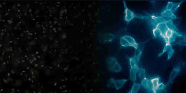 PromegaEnduRen™ Live Cell Substrate
