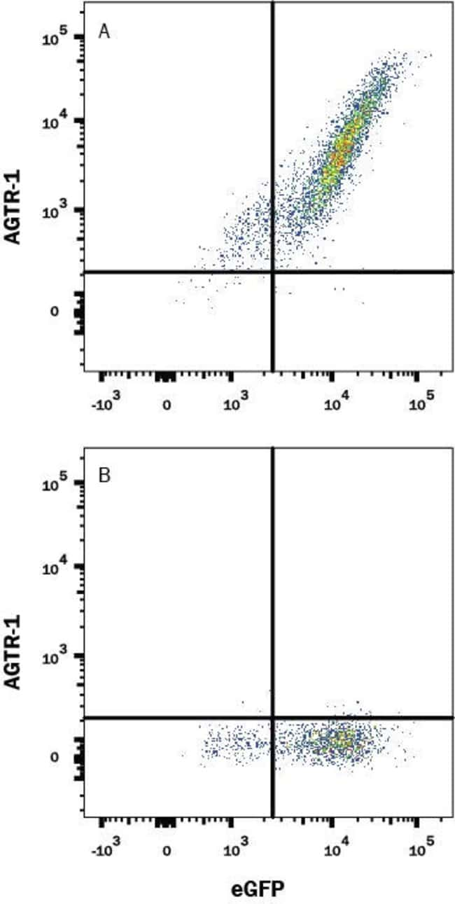 AGTR-1 Mouse anti-Human, Clone: 1010103, R 100 µg; Unconjugated