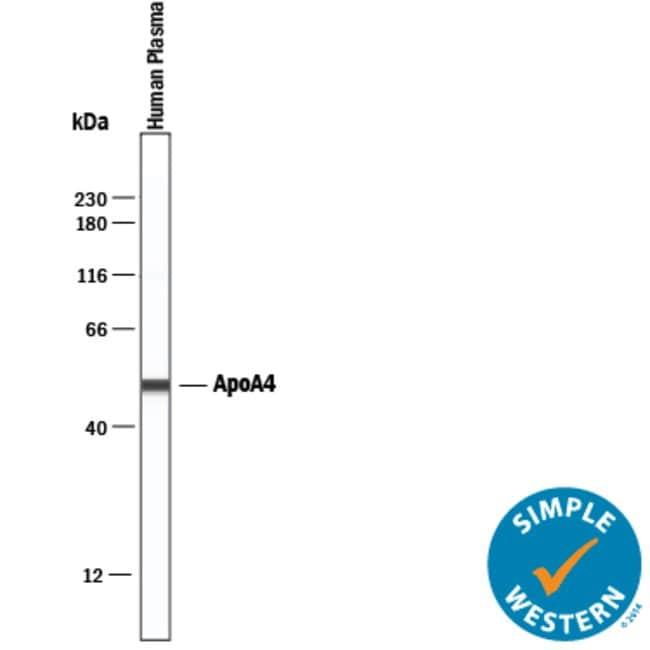 Apolipoprotein A-IV/ApoA4 Sheep anti-Human, Polyclonal, R 25µg; Unlabeled:Life