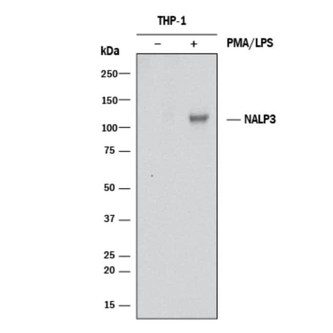 NLRP3/NALP3, Mouse anti-Human, Clone: 447609, R:Antibodies:Primary Antibodies