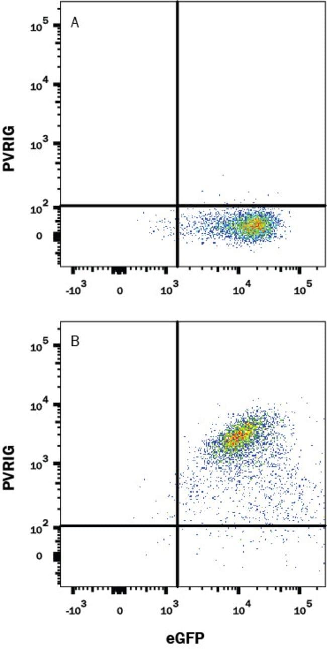 PVRIG, Rabbit anti-Human, Clone: 2334B, R:Antibodies:Primary Antibodies