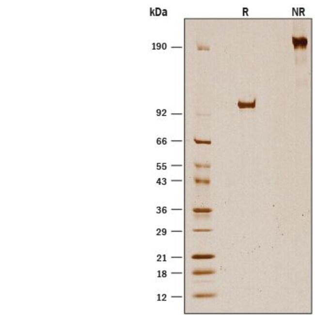 R Recombinant Human Fibrillin-1/FBN1 Fc Chimera Protein, CF 50 ug:Life