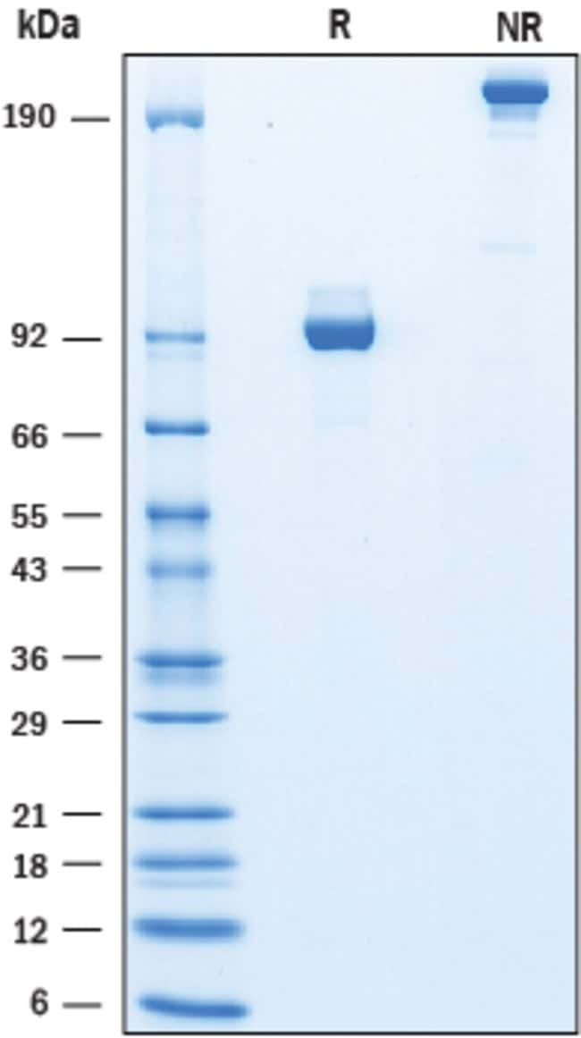 RD SystemsRecombinant Human IGSF8/CD316 Fc Chimera Protein, CF Quantity: