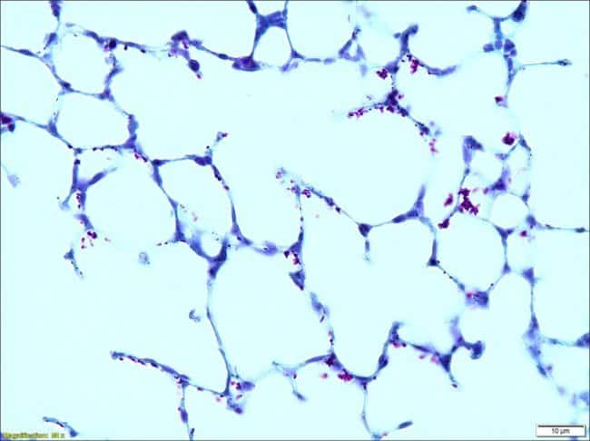 Sigma Diagnostics Malachite Green Solution:Chemicals:Biochemicals and Diagnostics