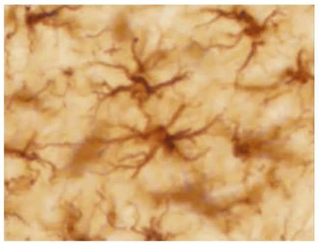 SouthernBiotechGelatin Subbed Slides:Microscope Slides:Glass Microscope