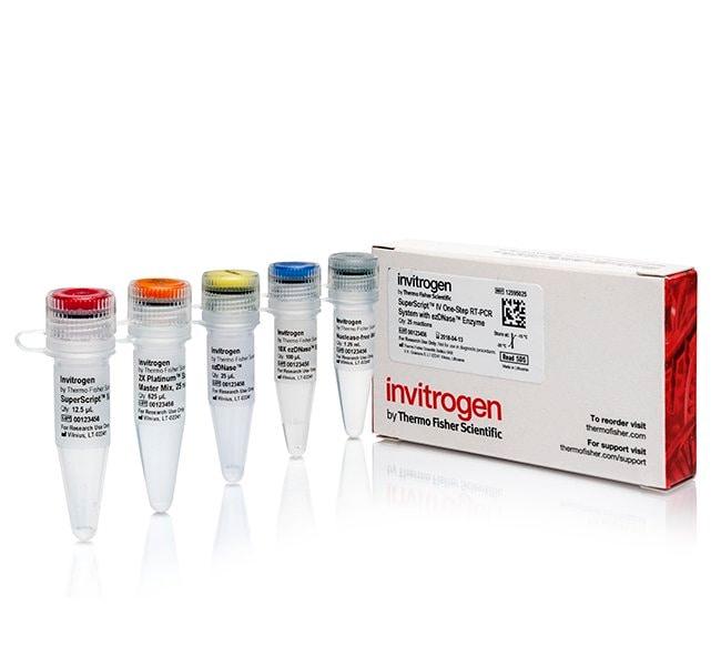 Invitrogen SuperScript IV One-Step RT-PCR System with ezDNase :Life Sciences:PCR