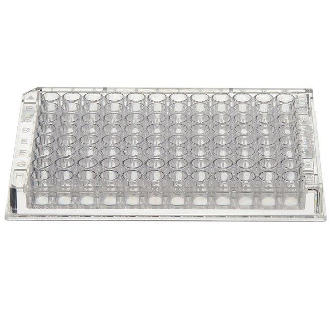 Thermo Scientific™Transparente Immuno Standardmodule Immulon; F12; 1 B; 380μL Produkte