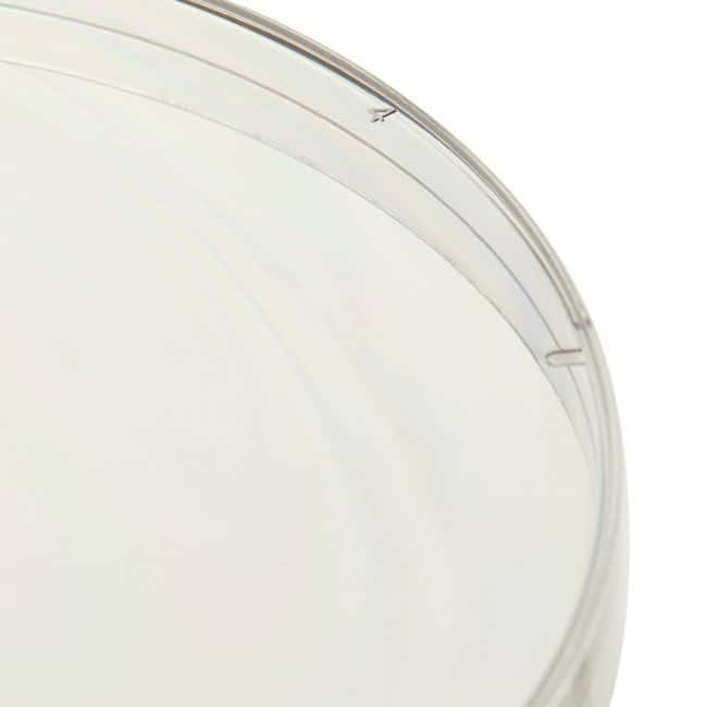FisherbrandPetri Dishes with Clear Lid Beveled ridge; 95 x 15mm:Dishes