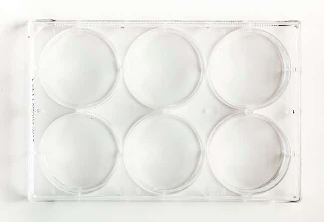 FisherbrandSurface Treated SterileTissue Culture Plates Well volume: 17mL;