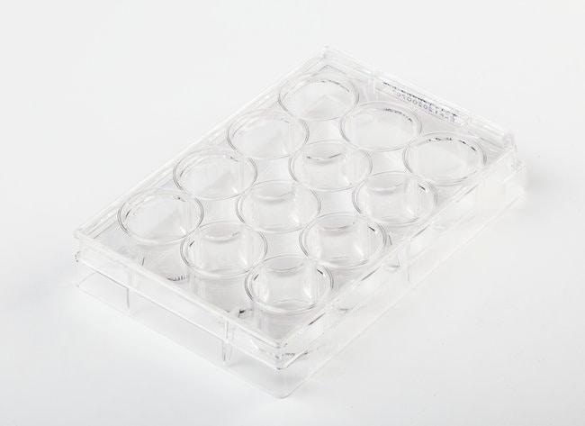 FisherbrandSurface Treated SterileTissue Culture Plates Well volume: 6.80mL;