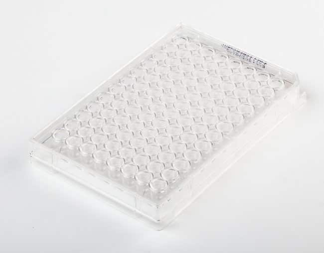 Fisherbrand96-Well, Cell Culture-Treated, U-Shaped-Bottom Microplate Well