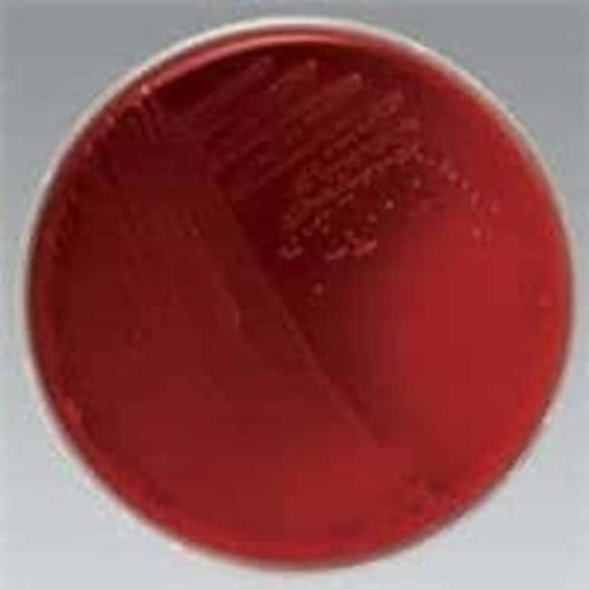Thermo Scientific Remel Inhibitory Mold Agar (w/chloramphenicol) :Life